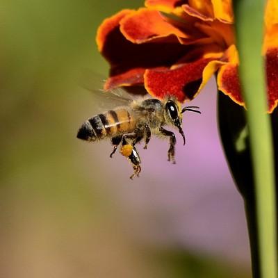 creperie miel